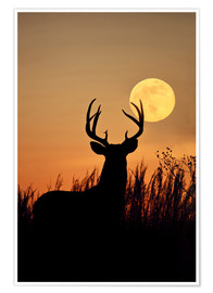Premium poster Whitetail Deer with full moon