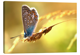 Canvas print  Butterfly in late summer - Julia Delgado