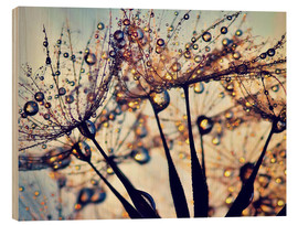 Wood print  Dandelion color - Julia Delgado