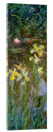 Acrylic print  Daffodils in the field - Claude Monet