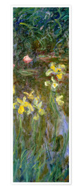 Premium poster  Daffodils in the field - Claude Monet