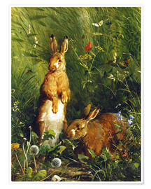 Poster Rabbits in a meadow