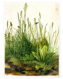 Premium poster  The great piece of turf - Albrecht Dürer
