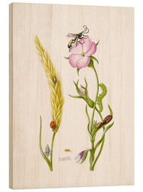 Wood  Wheat & Corncockle - Maria Sibylla Merian