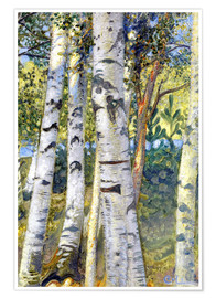 Premium poster Birch trunks