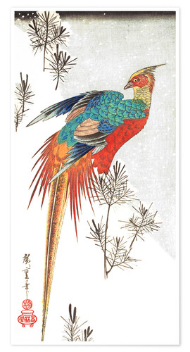 Premium poster Pheasant and Young Pines in Snow