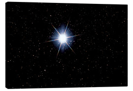 Canvas print  Star Sirius - MonarchC