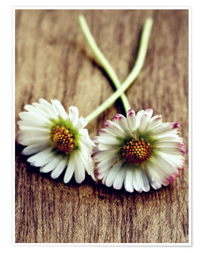 Poster Daisy Vintage