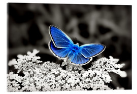 Julia Delgado - Blue butterfly on black colorkey II