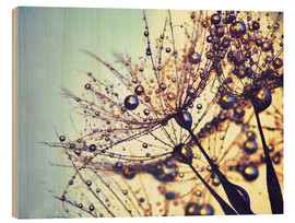 Wood print  Dandelion dream of colors - Julia Delgado