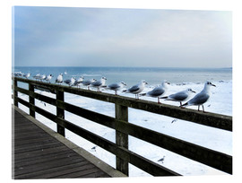 Acrylic print  Seagull line-up, Baltic Sea - Städtecollagen