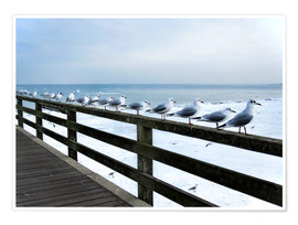 Premium poster  Seagull line-up, Baltic Sea - Städtecollagen