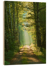 Wood print  Into the light - Moqui, Daniela Beyer