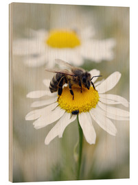 Wood print  Bee on the camomile lawn - Falko Follert