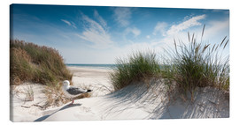 Canvas print  Dune with fine beach grass and seagull, Sylt - Reiner Würz RWFotoArt