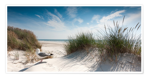 Premium poster Dune with fine beach grass and seagull, Sylt