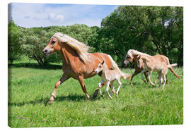 Katho Menden - Haflinger mares with their foals running