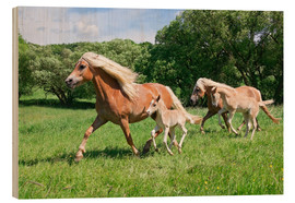 Wood print  Haflinger mares with their foals running - Katho Menden