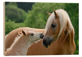Wood print  Haflinger horses foal with mare - Katho Menden