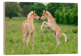 Wood print  Haflinger foals playing and rearing - Katho Menden