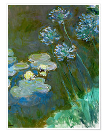 Premium poster Nympheas et Agapanthes (Waterlillies a. Agapanthus)
