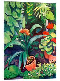 Acrylic print  Flowers in the Garden, Clivia and Pelargoniums - August Macke