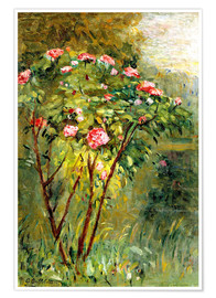 Premium poster The rose bush