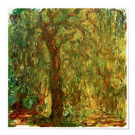 Poster Weeping willow