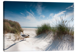 Canvas print  Sylt - dune with fine beach grass and seagull - Reiner Würz RWFotoArt