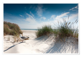 Poster  Sylt - Dune with fine beach grass and seagull - Reiner Würz RWFotoArt
