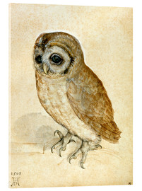 Acrylic glass  Little owl - Albrecht Dürer