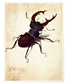 Premium poster Stag beetle
