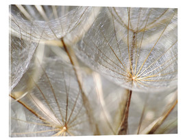 Acrylic glass  Dandelion nature - Julia Delgado