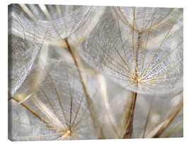 Canvas print  Dandelion nature - Julia Delgado