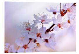 Acrylic glass  cherry blossoms - Renate Knapp Waldundwiesenfee
