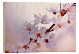 Wood print  cherry blossoms - Renate Knapp Waldundwiesenfee