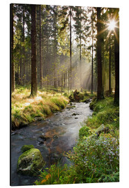 Aluminium print  Bode river in Harz, Germany - Dave Derbis