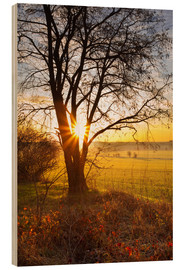 Wood print  Sunrise fields - Dave Derbis