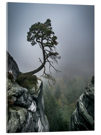 Acrylic print  Lonely Tree on the Brink - Andreas Wonisch
