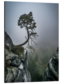 Aluminium print  Lonely Tree on the Brink - Andreas Wonisch