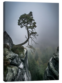 Canvas print  Lonely Tree on the Brink - Andreas Wonisch