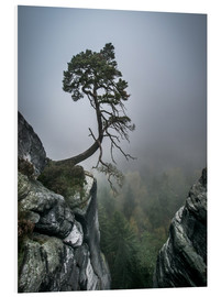 Foam board print  Lonely Tree on the Brink - Andreas Wonisch