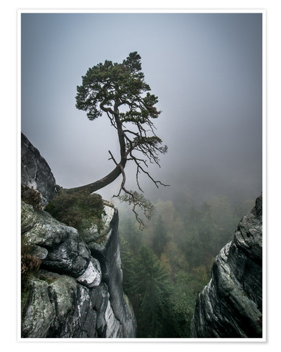 Premium poster Lonely Tree on the Brink