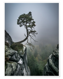 Premium poster  Lonely Tree on the Brink - Andreas Wonisch