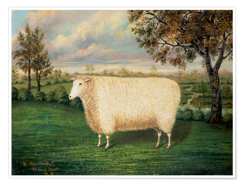 Premium poster Award winning sheep from the old Lincoln breed, 1835