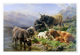 William Watson - Highland Cattle