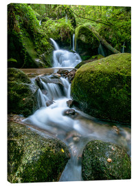 Canvas print  Little Waterfall in Black Forest - Andreas Wonisch