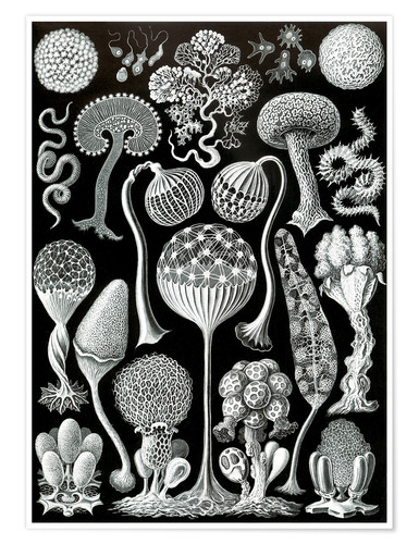 Premium poster Mycetozoa (Forms of Nature: graphic 93)