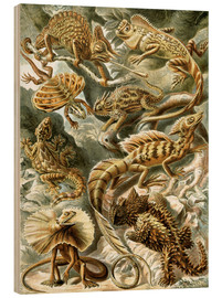 Wood print  Lacertilia - Ernst Haeckel