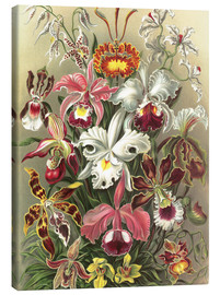 Canvas print  Orchidae - Ernst Haeckel